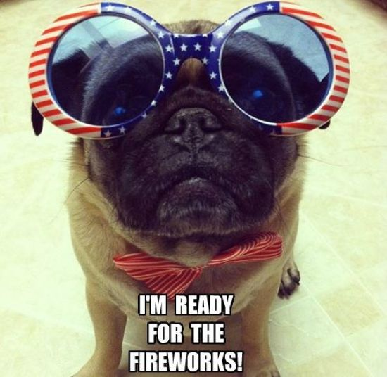 4th Of July Meme Funny Dog