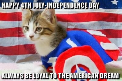 Happy 4th Of July Cat Meme