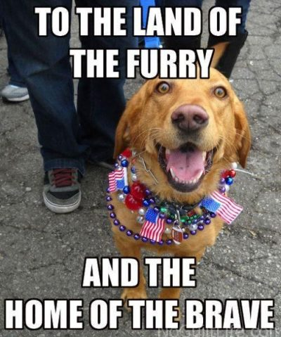 Happy 4th Of July Dog Meme